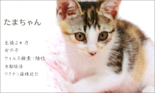 110903-新しい家族募集ちぅ!~たまちゃん~