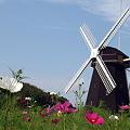 Photos: 風車の丘で