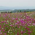 Photos: 霧島の花畑