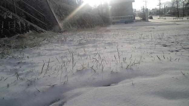 Photos: 菅平に雪