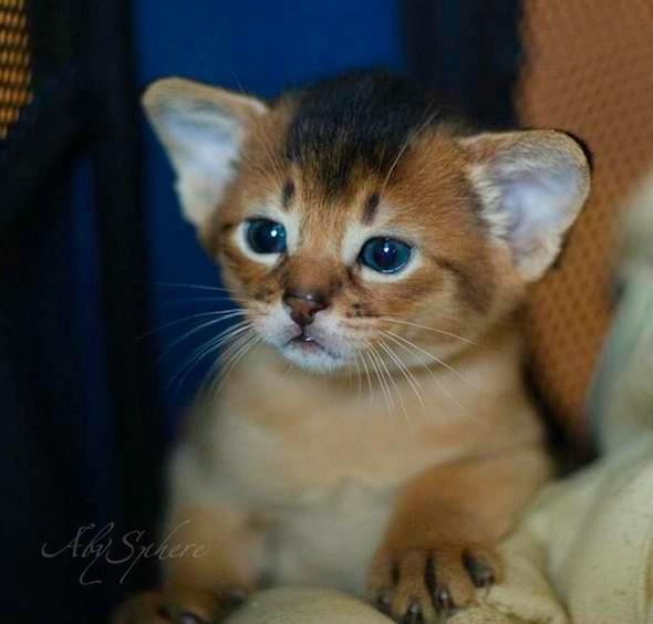 kitten1026_02