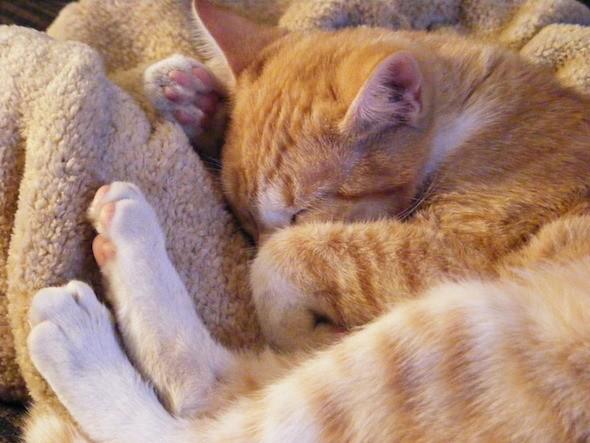 kitten1035_17
