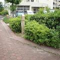 Photos: 植え込みや柵で道幅が3分の1に!!(小牧市篠岡1丁目)_03