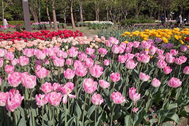 Photos: Tulip_Fair05052011dp1-02