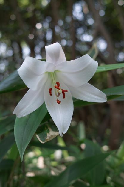 Photos: flower06132011dp2-03