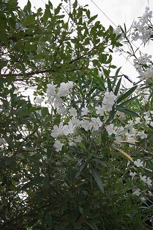 Flower07022011sd15-05