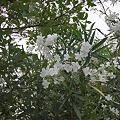 Photos: Flower07022011sd15-05