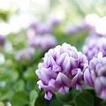 写真: 春を夢見る