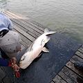 写真: 釣り1