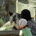写真: クマと親娘DSCN1265