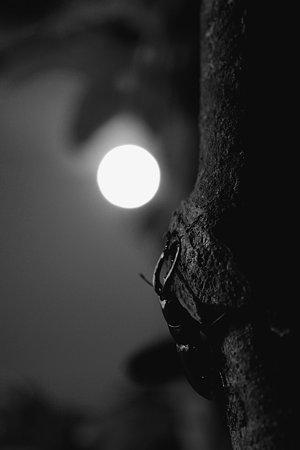 満月の森で