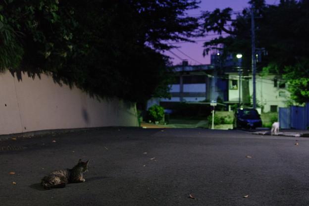Photos: 夜の野良猫3