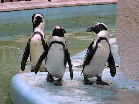 20110812 上野 真夏の夜のペンギン02