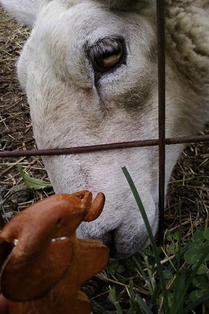 Photos: 羊や山羊もいるんだばー