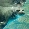 写真: marinepia120609018
