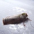 写真: yamanao999_insect2011_298