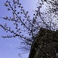 Photos: 2011-04-03の空