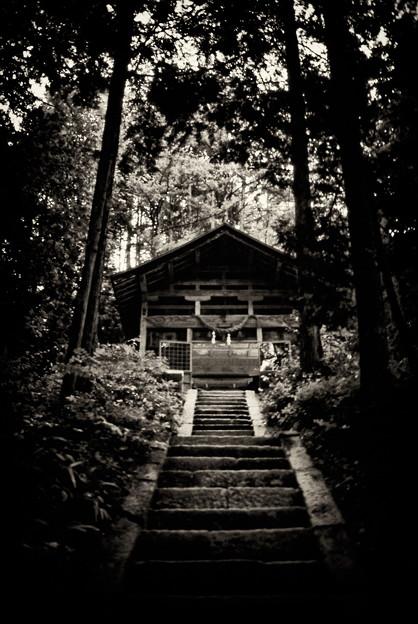 神の住む森
