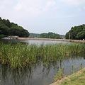 Photos: 高場池 (5)