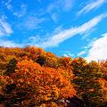 燃える秋に^^