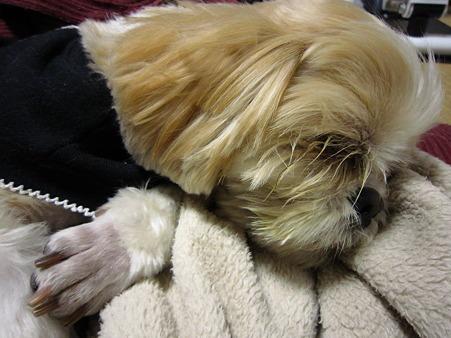 ぐっすり寝ています。