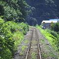 Photos: 夏草の線路