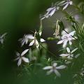 Photos: 散る花有れば咲く花有り~~