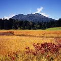 尾瀬の草紅葉