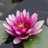 lotus48