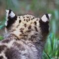 Photos: 猫ちゃん??