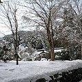 写真: 古知谷阿弥陀寺03