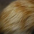 写真: Fur... 1-25-11