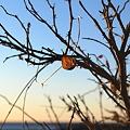 写真: Bailey Island 2-14-09