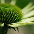 写真: Green 7-12-11