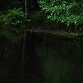 Photos: Dark Pond