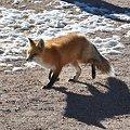 Photos: fox1