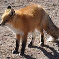 Photos: fox2