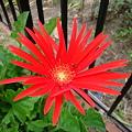 裏庭に咲く花2