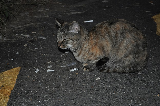 Photos: 不良猫が待ち合わせ中です。_DSC_3103