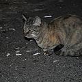 不良猫が待ち合わせ中です。_DSC_3103