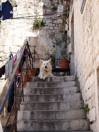世界遺産の番犬