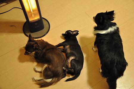 我が家の犬たち