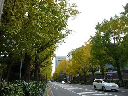 101119-紅葉 山下公園通り (9)