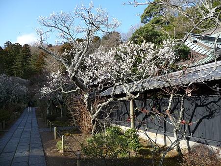 110225-東慶寺  (8)