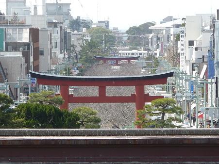 110225-鶴岡八幡宮 (51)