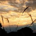 写真: raw-20101030_171823