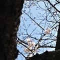 写真: 20110327_125034_raw