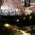 Photos: 070329sakura4