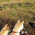 写真: 黒猫_08531