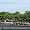 照片: 葵祭 出町橋を渡る牛車